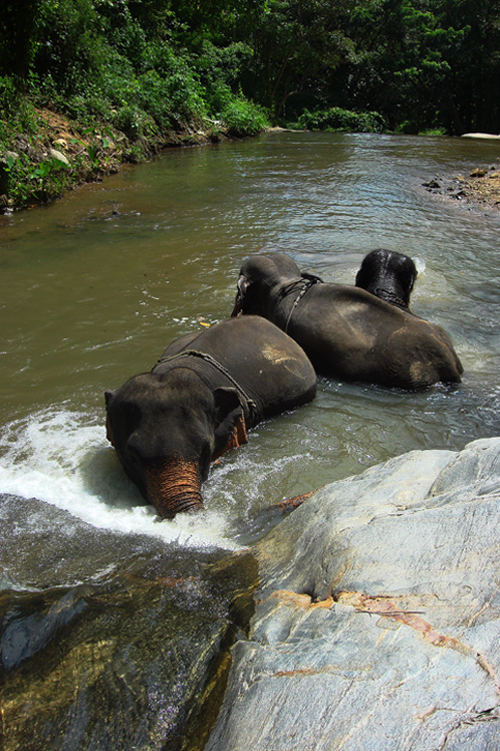 Swimming with elephants in the waterfall
