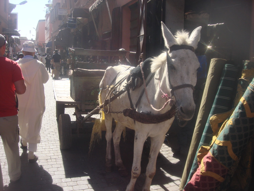 Main form of transportation in Marrakech's medina